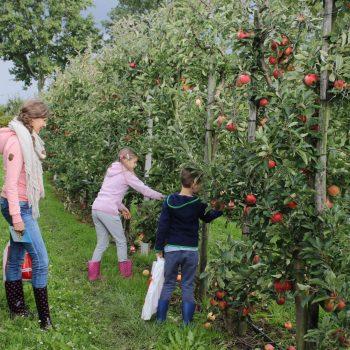 Appels-plukken-in-de-boomgaard-e1568824679266.jpg