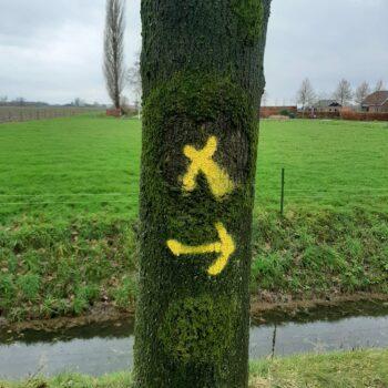 markering_bomen_kappen_2-scaled.jpg